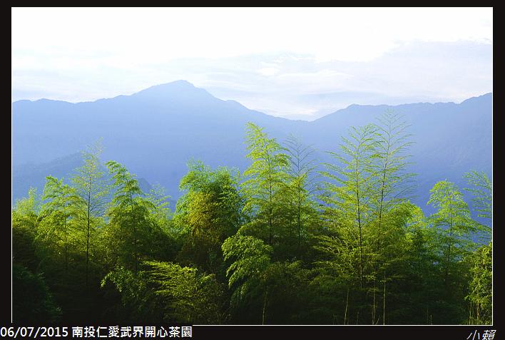 20150606南投仁愛武界開心茶園_0079.jpg