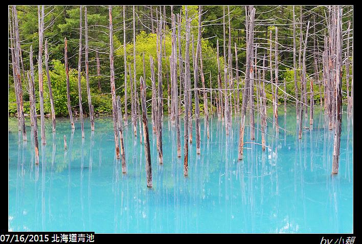 20150716北海道美瑛青池_0033.jpg