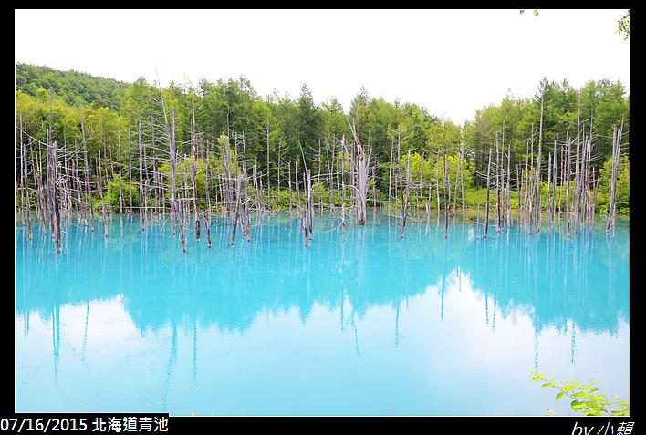 20150716北海道美瑛青池_0016.jpg