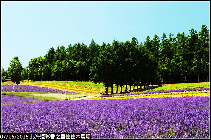 20150716北海道彩香之里佐佐木農場_0081.jpg