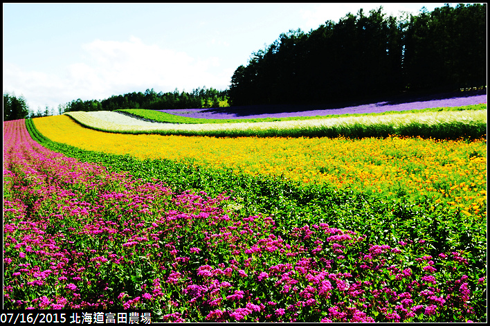 20150716北海道富田農場_0066.jpg