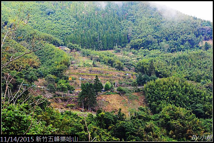 20151114新竹五峰樂哈山_0023.jpg