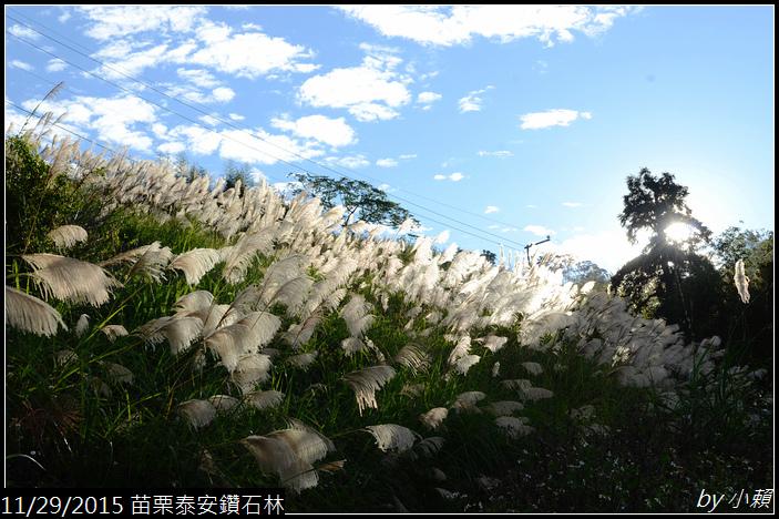 20151128苗栗泰安鑽石林_0434.jpg