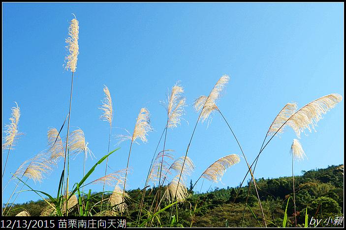 20151213苗栗南庄向天湖48.jpg