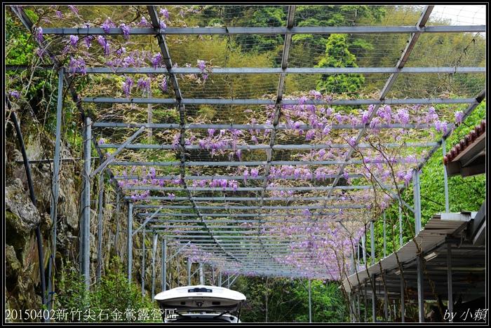 20160412新竹尖石金鶑露營區252.jpg