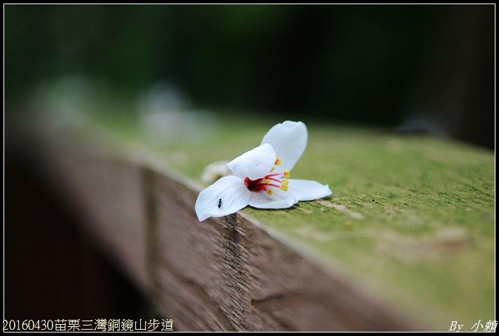 20160430苗栗三灣銅鏡山步道20.jpg