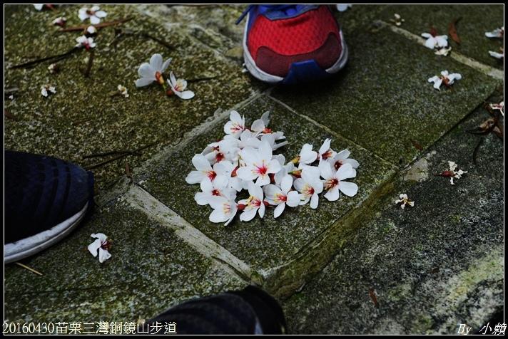20160430苗栗三灣銅鏡山步道25.jpg