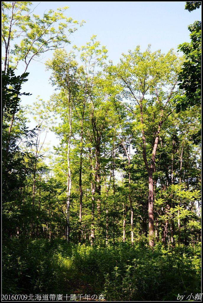 20160709北海道帶廣千年の森025.jpg