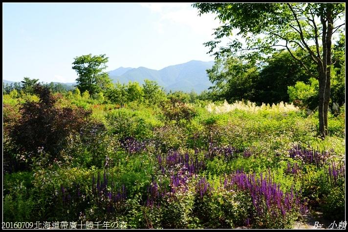 20160709北海道帶廣千年の森095.jpg