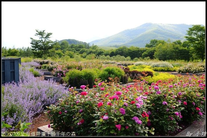 20160709北海道帶廣千年の森109.jpg