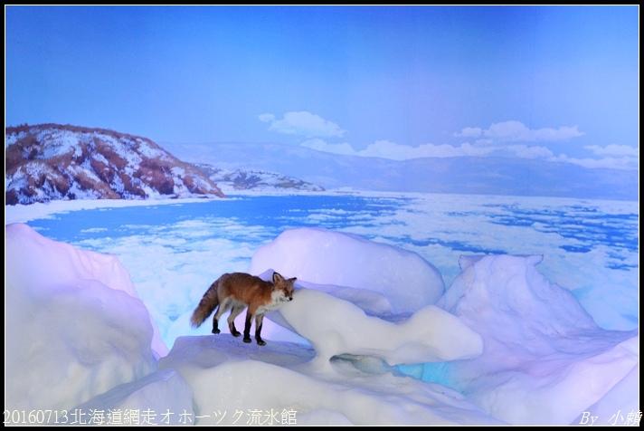20160713北海道網走オホーツク流氷館043.jpg