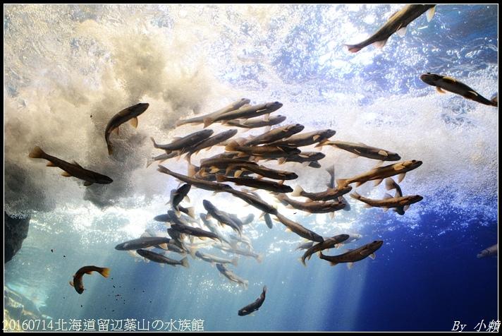 20160714北海道留辺蘂山の水族館16.jpg