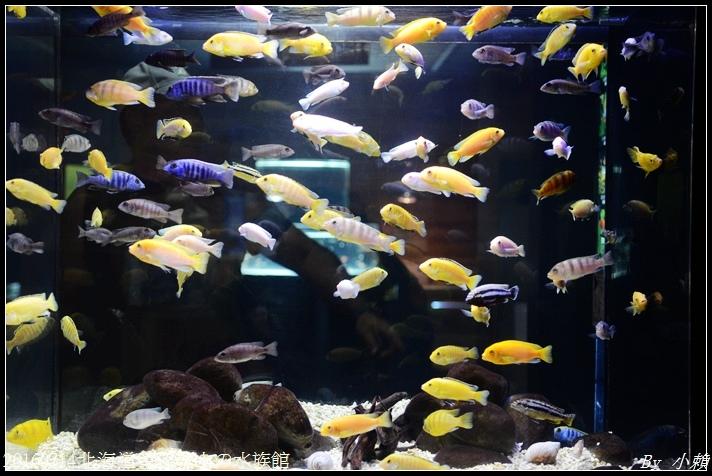 20160714北海道留辺蘂山の水族館18.jpg