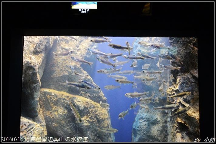 20160714北海道留辺蘂山の水族館53.jpg