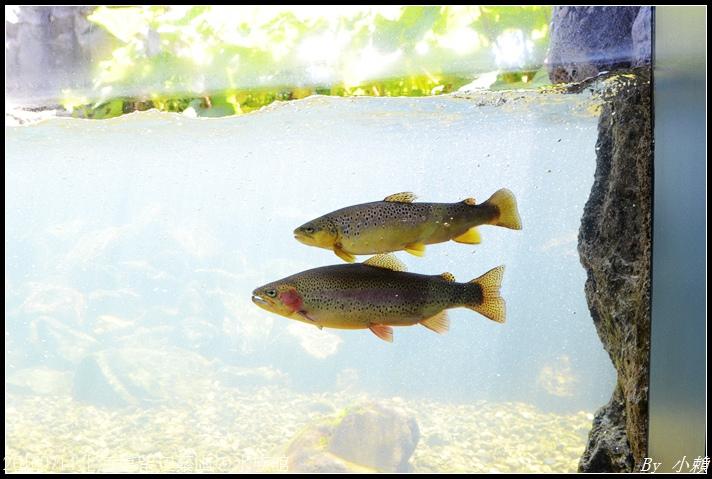 20160714北海道留辺蘂山の水族館57.jpg