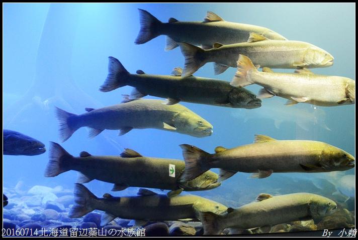 20160714北海道留辺蘂山の水族館64.jpg