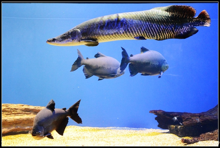 20160714北海道留辺蘂山の水族館73.jpg