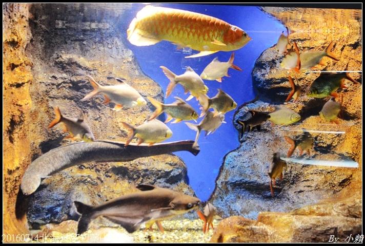 20160714北海道留辺蘂山の水族館80.jpg