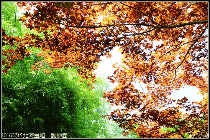 20160715北海道旭山動物園020.jpg