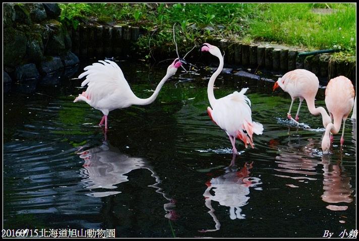 20160715北海道旭山動物園011.jpg