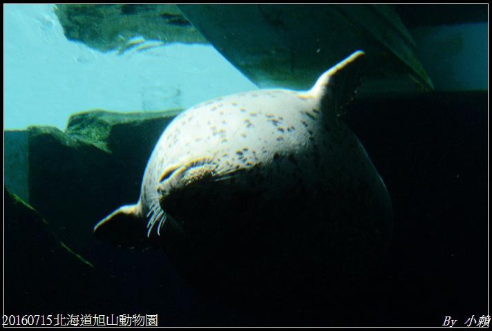 20160715北海道旭山動物園147.jpg