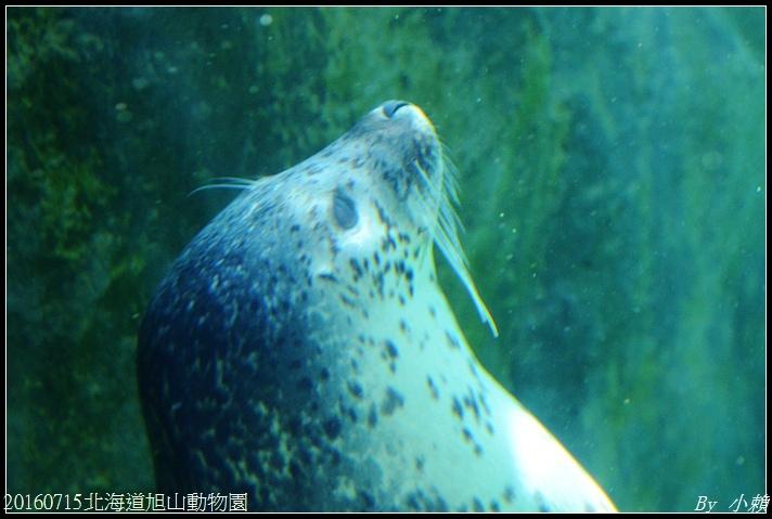 20160715北海道旭山動物園154.jpg