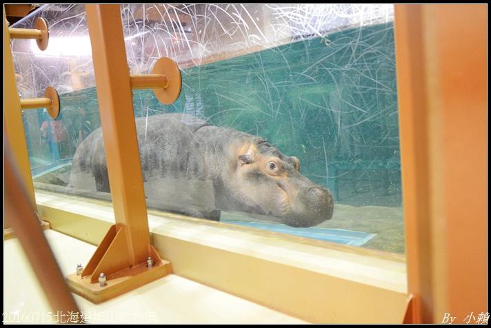 20160715北海道旭山動物園291.jpg
