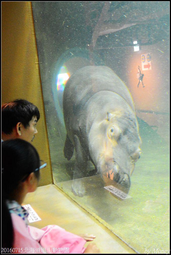 20160715北海道旭山動物園301.jpg