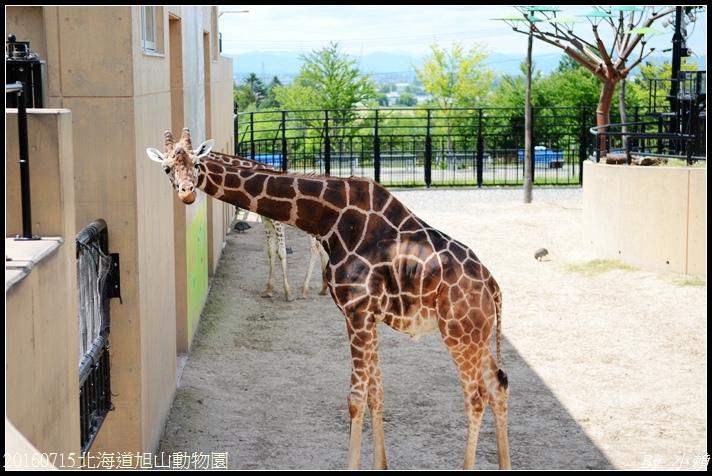 20160715北海道旭山動物園285.jpg