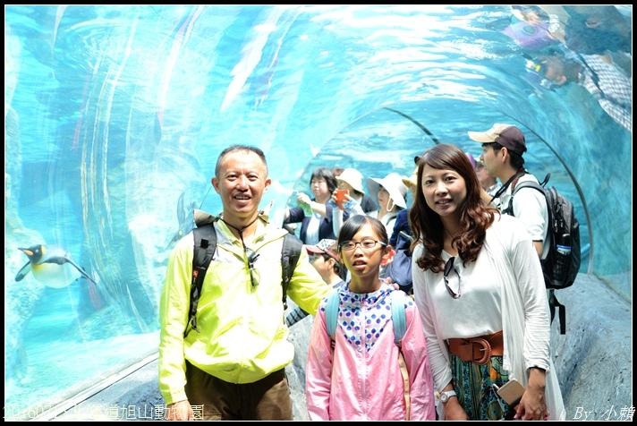 20160715北海道旭山動物園066.jpg