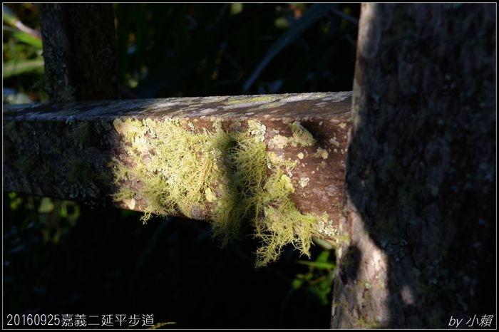 20160924嘉義二延平步道120.jpg