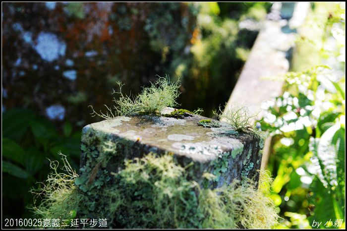 20160924嘉義二延平步道125.jpg