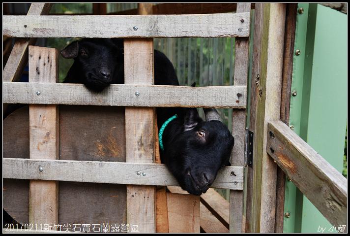 20170211新竹尖石寶石蘭露營區299.jpg