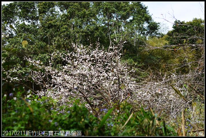 20170211新竹尖石寶石蘭露營區159.jpg