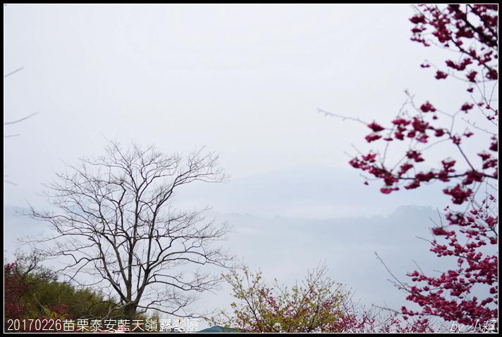 20170226苗栗泰安藍天嶺露營區103.jpg