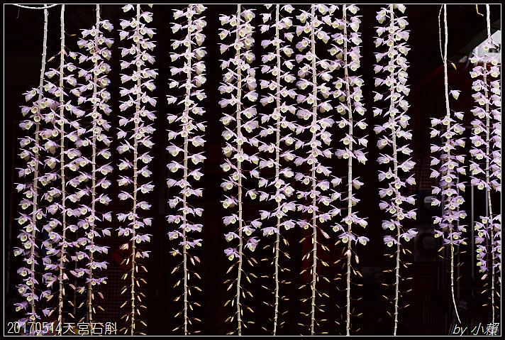 20170514天宮石斛39.jpg