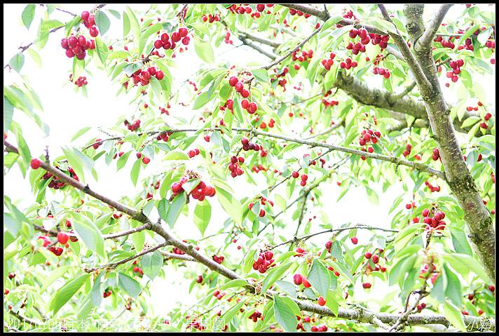 20170705日本青森森の中の果樹園28.jpg