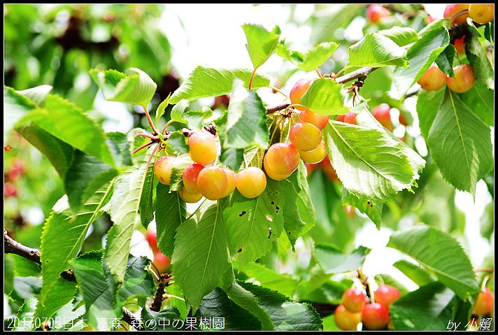 20170705日本青森森の中の果樹園24.jpg