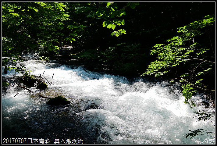 20170707日本青森 奥入瀬渓流323.jpg