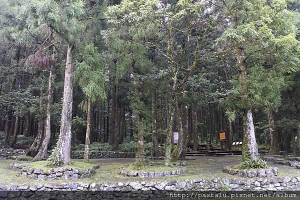 樹林區.JPG
