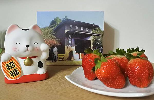 莓有良心 1 封面.jpg