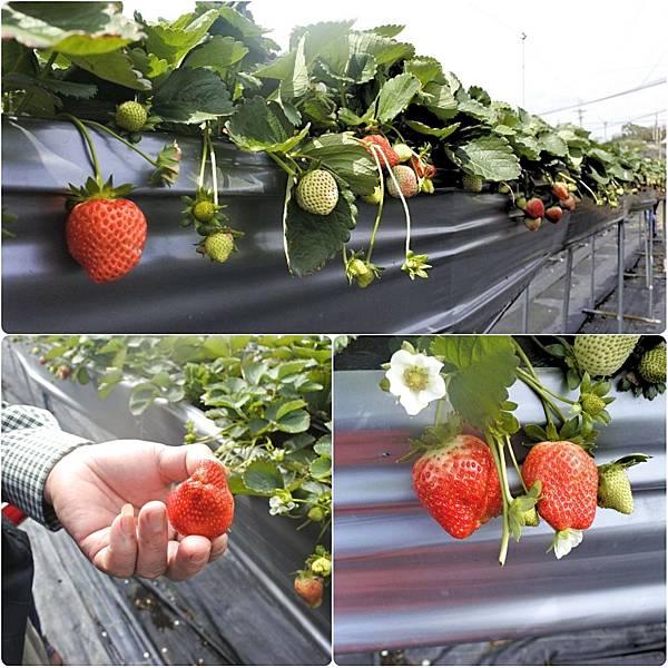 莓有良心 2f.jpg