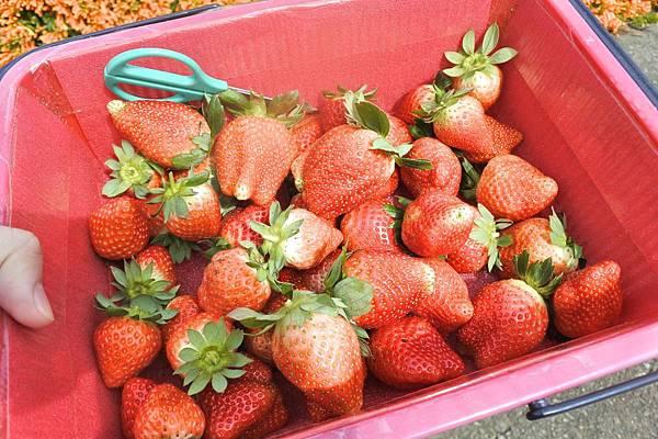 莓有良心 3.jpg