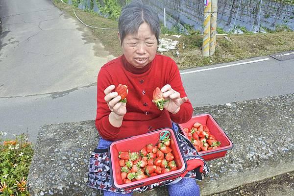 莓有良心 3a.jpg