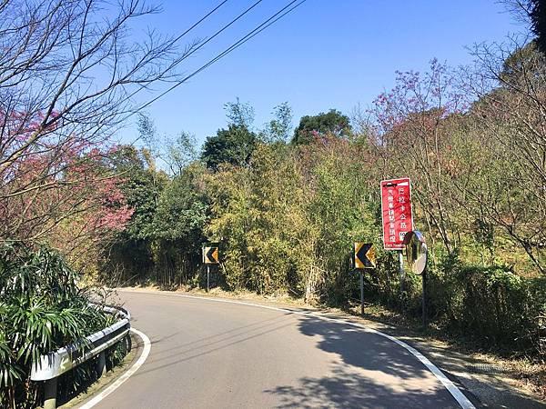 淡水櫻花大道b.jpg