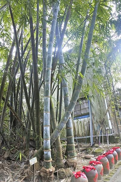 青竹 文化園區c3.jpg