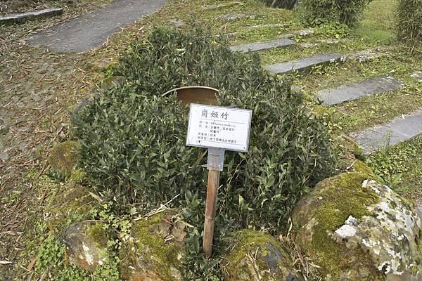 青竹 文化園區c92.jpg