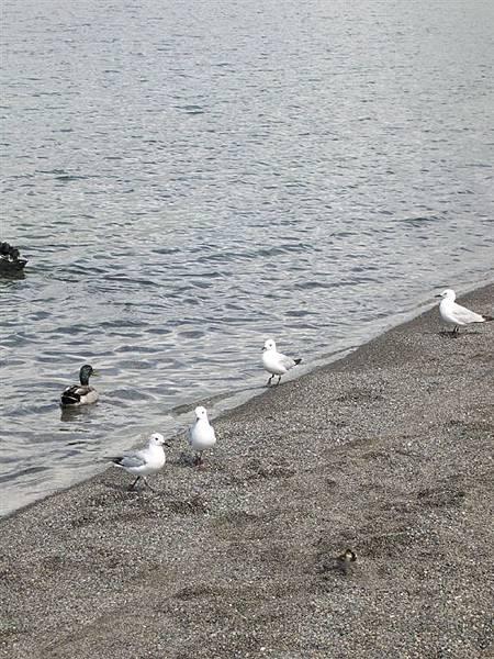 12-7陶波湖畔