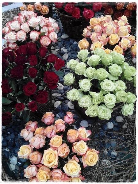 玫瑰展-1.jpg