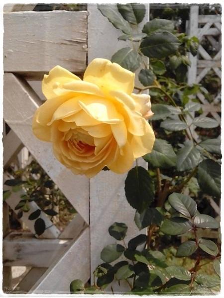 玫瑰展-4.jpg